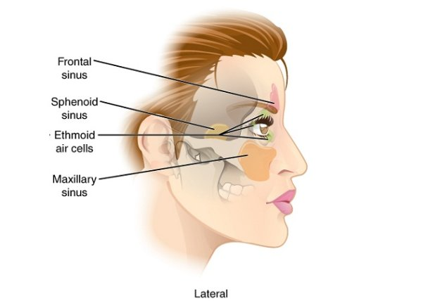 Treatment for Sinus Infection